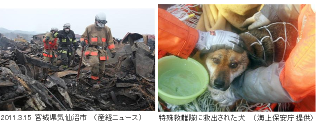 Firemen_Dog