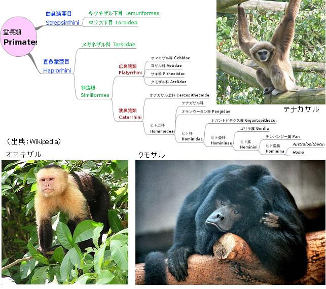 PrimatesTree
