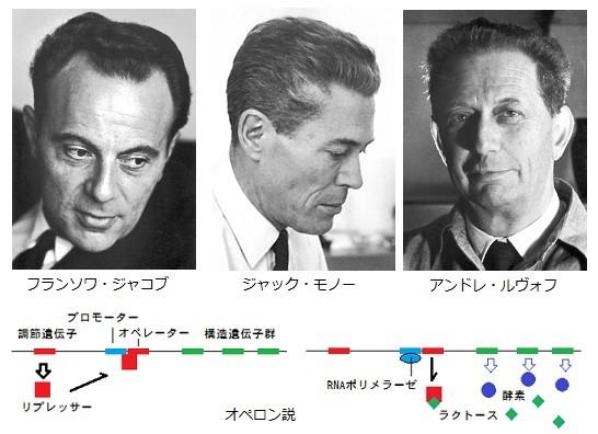 第65回ノーベル生理学・医学賞 ...