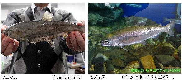 Kunimasu_Himemasu
