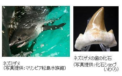 サイエンスジャーナル : 日本最...