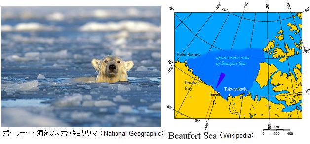 Polar-bears-swimming-longer