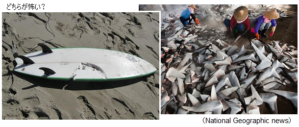 Environnement-shark-fins