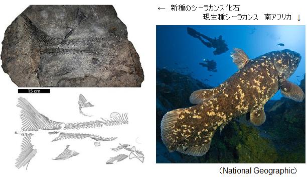 New-species-Coelacanthiformes