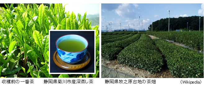 Green_tea_leaves