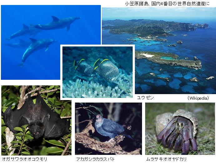 小笠原諸島の自然の画像 p1_28