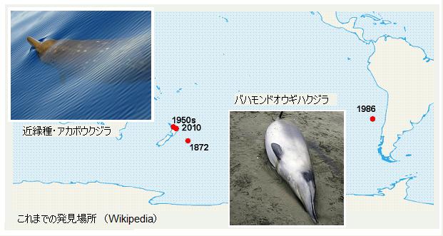 Beaked_Whale