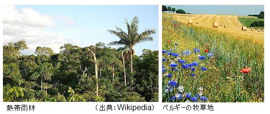 Jungle_Grassland