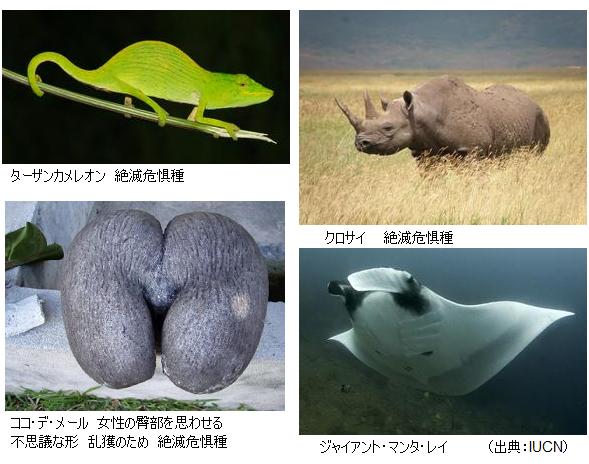 絶滅種865種!絶滅危惧種19,570種!IUCN「レッドリスト2011年版 ...