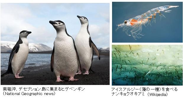 Penguin-Decline-Antarctica
