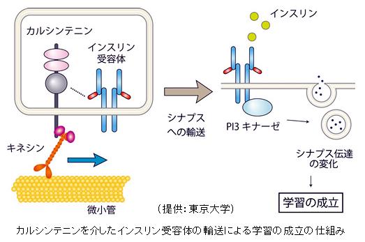 複合タンパク質 (ふくごうタンパ...