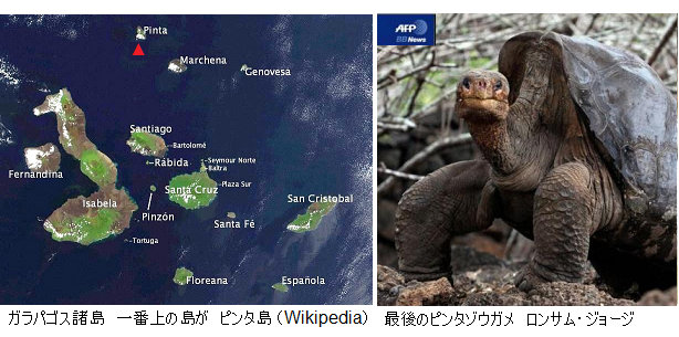 Galapagos_LonesomeGeorge