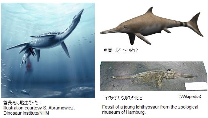 Plesiosauria_Ichthyosaurus