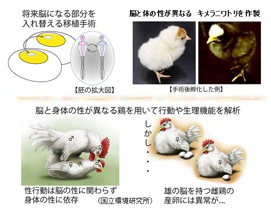Chimera_Chicken