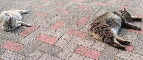 猫20190830
