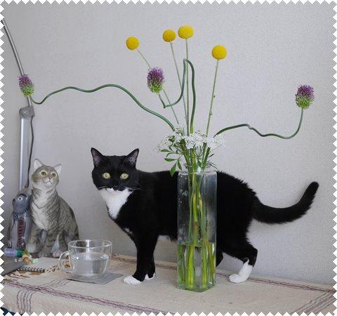 _ポンポン花ネコ