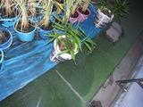 20120918_saien02