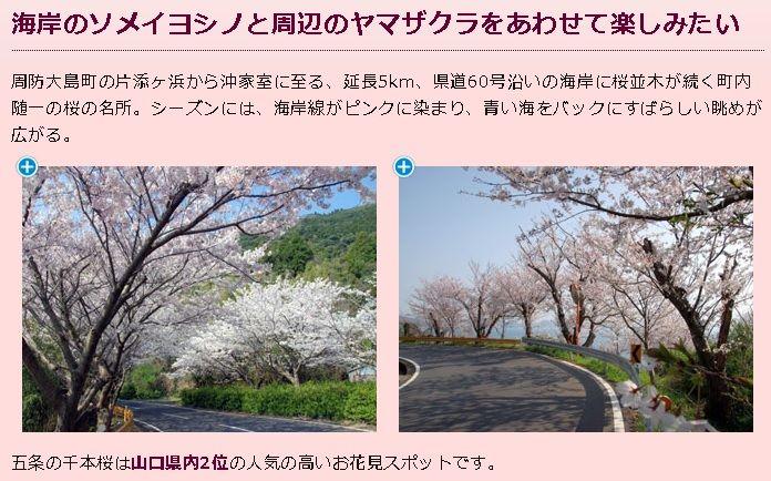 五条の千本桜