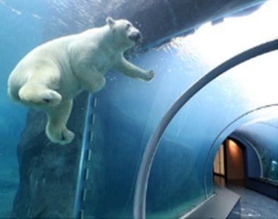 圓山動物園北極くま23