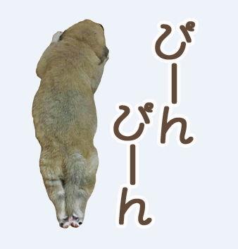 犬のきもち LINE スタンプ 犬