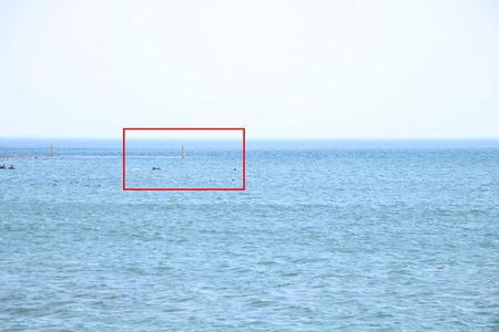 イルカ 氷見 天然 野生 野生イルカ ウォッチング 海岸