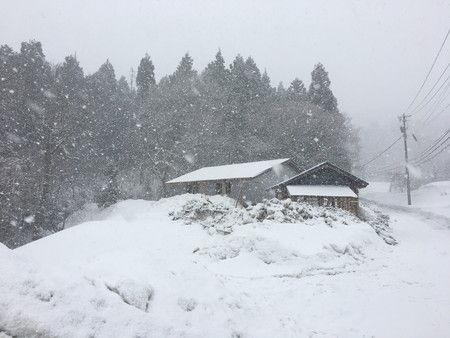 雪が激しく降る ヤギ小屋 積雪 (1)