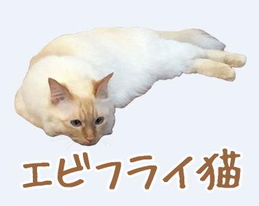 LINE スタンプ ネコ エビフライ エビフライ猫