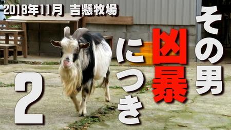 ヤギの動画  10大ニュース (2)