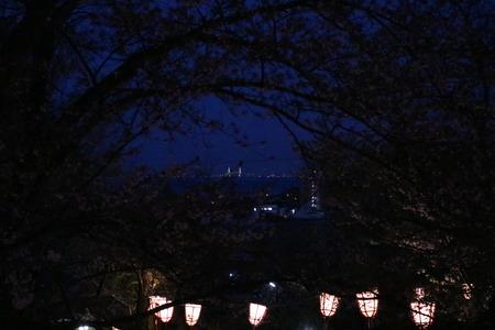 1 氷見市 朝日山 夜景 桜 ライトアップ (2)