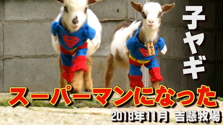 ヤギの動画  10大ニュース (1)