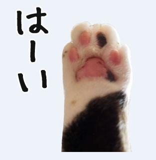 LINEスタンプ ネコ 猫 スタンプ 制作