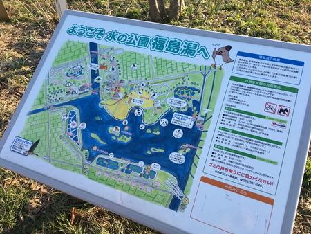 03 福島潟 菜の花 時期 季節 冬 (2)