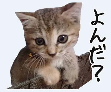 LINEスタンプ ネコ 猫 スタンプ 制作 無料