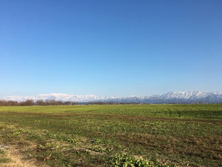 03 福島潟 菜の花 時期 季節 冬 (1)