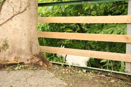 03 子ヤギの脱走 柵から逃げた (1)