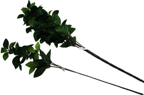 香花(シキビ)