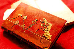 Orange_book_and_flowers