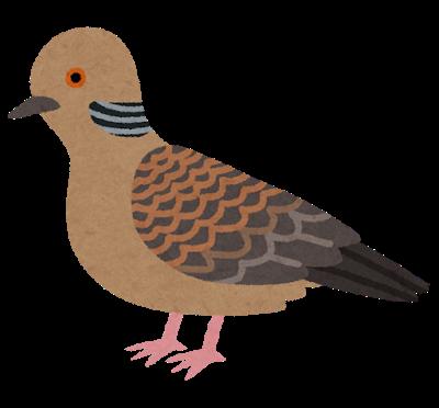 bird_kijibato