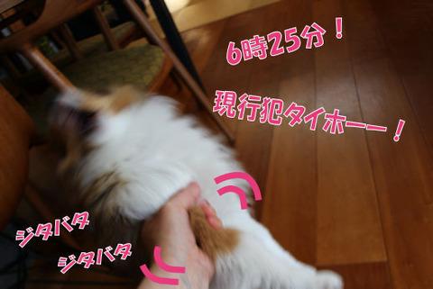 IMG_3574