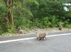 屋久島観光4