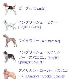 動物の医学3