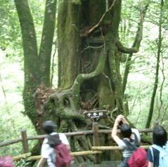 屋久島観光6