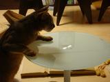 組み立てたばかりのテーブルに早速