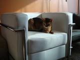 新しいソファーに寛ぐライトさん