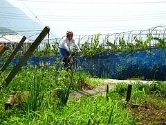 ブドウ畑の中をを登る