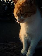 榎本牧場の猫