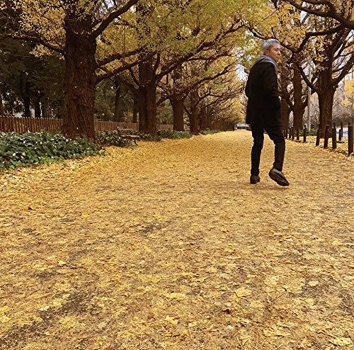 sano motoharu_autumn