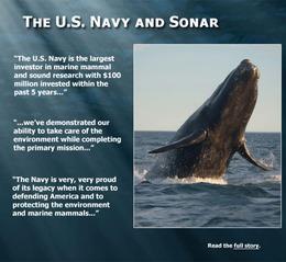 クジラ、イルカの大量浜辺打ち上げ死