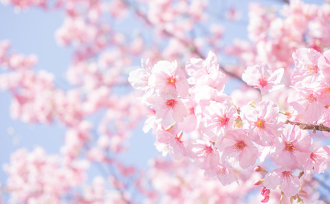 naniwa-sakura-spot