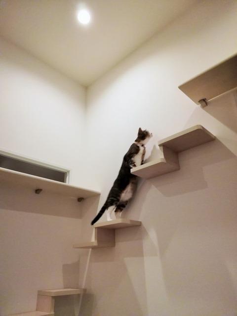 猫ステップ 大建2